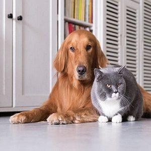 Articoli per veterinaria